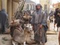 paloma d camel